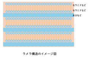 ラメラ構造のイメージ